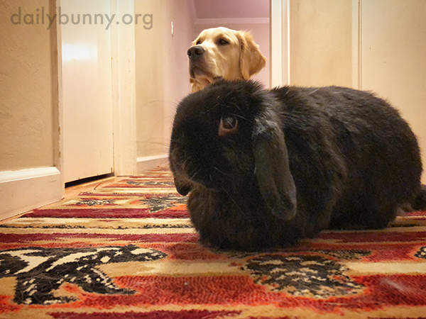 You Need Two Different Kinds of Treats to Get Down This Hallway