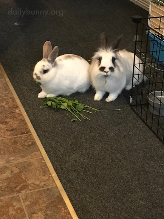 Bunnies Begin to Embrace Friendship 1