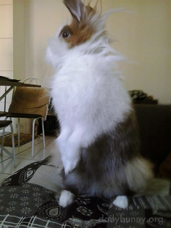 Bunny Seems to Have Just Heard Something