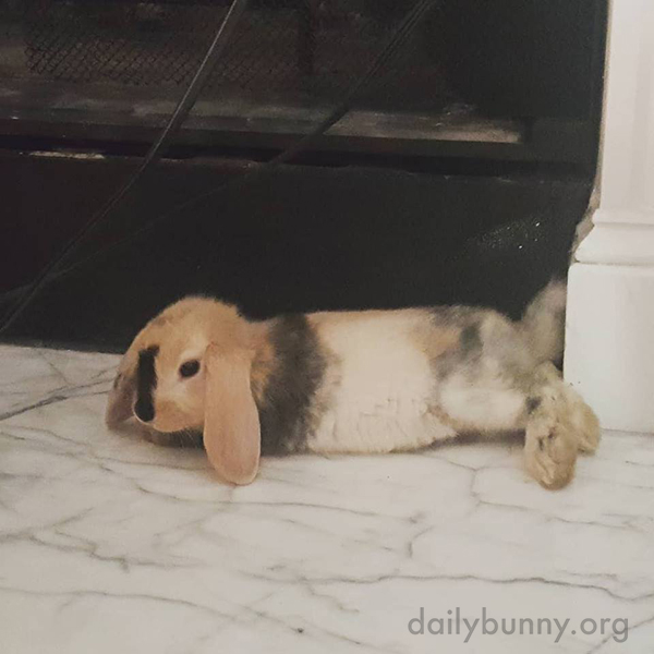 Bunny Cools Down Her Furry Belly on the Fireplace Threshold
