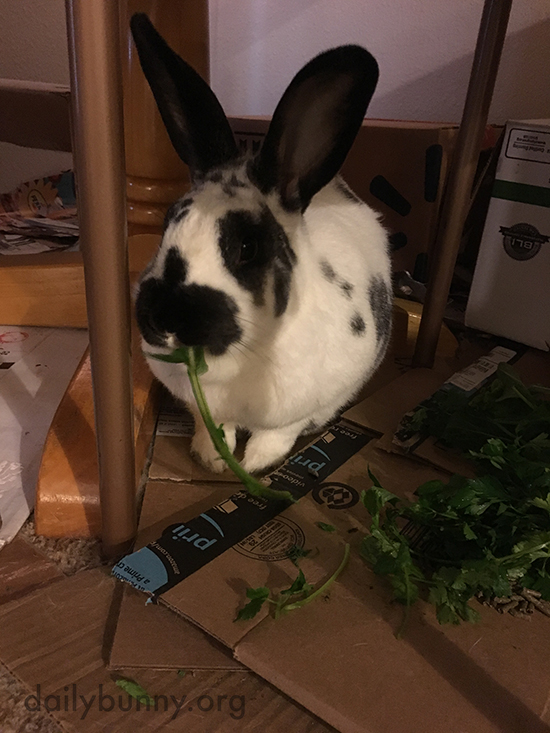 Don't Worry, Bunny Will Get Through That Whole Pile of Greens 1