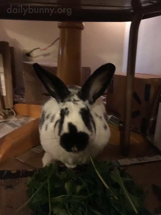 Don't Worry, Bunny Will Get Through That Whole Pile of Greens 4
