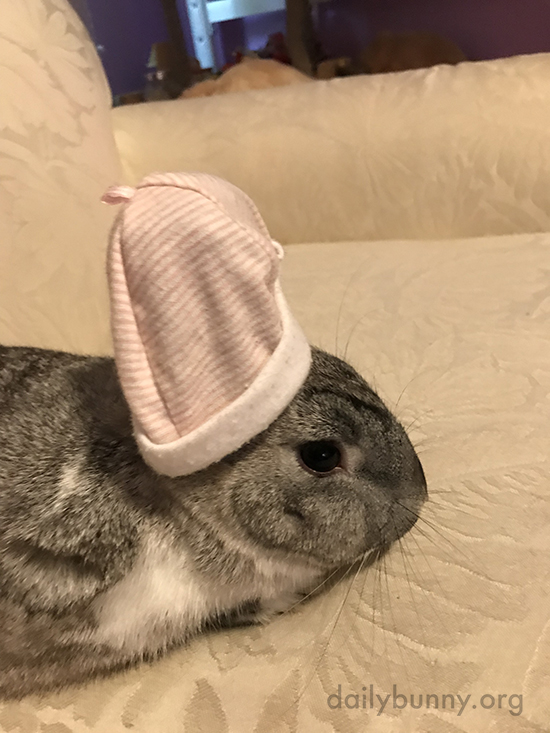 Bunny Has a Tiny Nightcap