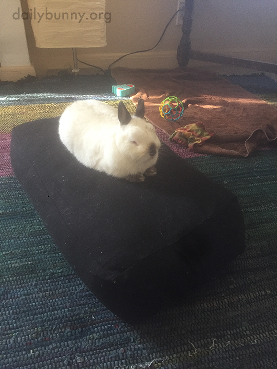 Bunny Has Claimed the Sofa Bolster as His Own 1