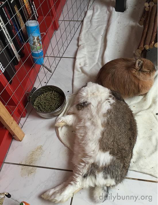 Bunny, Where Did Your Head Go?