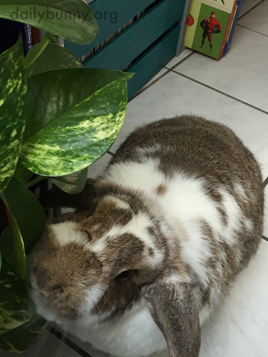 Bunny Checks Out the House Plant
