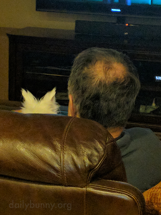 Bunny Watches TV with His Human