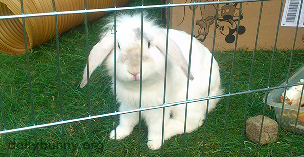 Bunny Hardly Knows Where to Start: The Tunnel, the Cardboard, the Veg, the Grass?