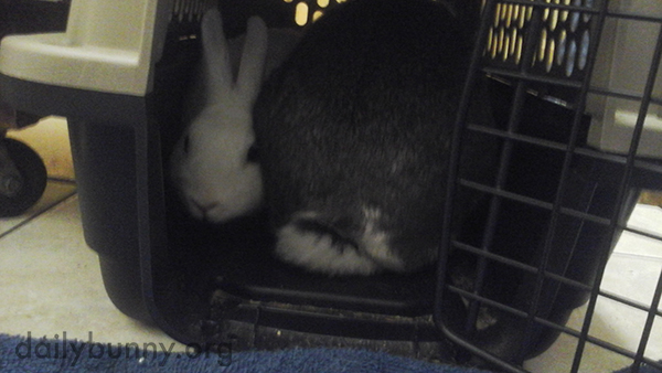 Bunnies Huddle Together at the Vet 1