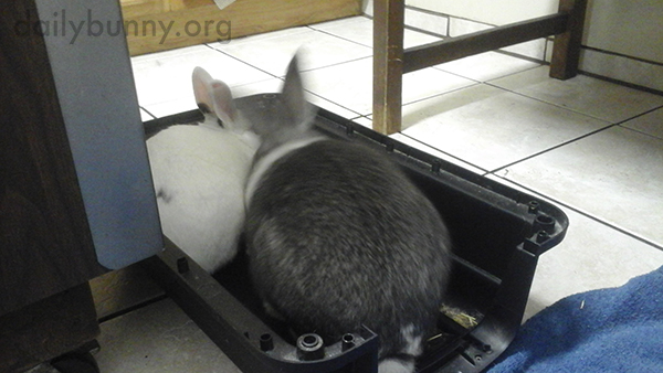 Bunnies Huddle Together at the Vet 2