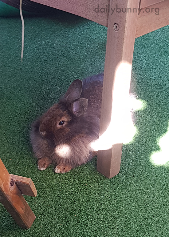Bunnies Relax on a Sunny Porch 1