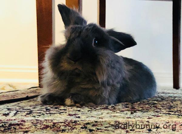 Bunny Looks Skeptical