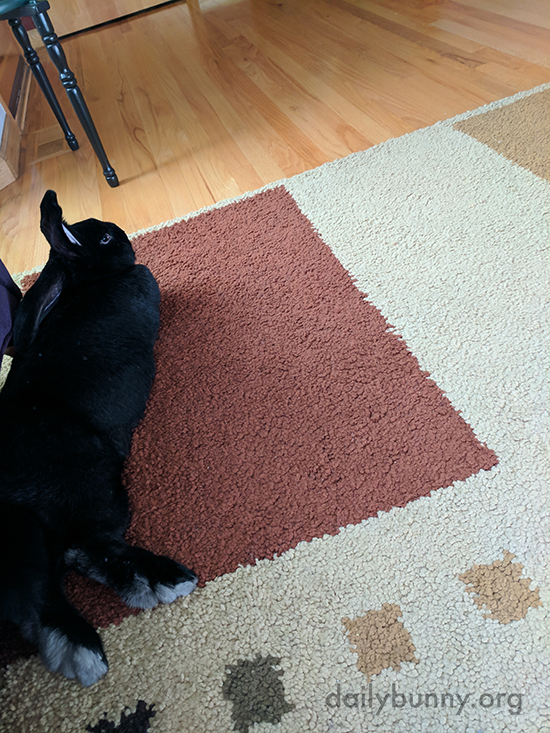 Right Now Bunny Is Interested in Chilling, Not Photos