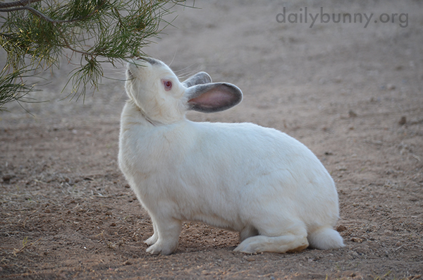 Bunny Stops and Smells the Trees