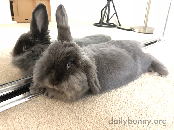 Bunny's in a Perfect Place to Admire Her Cuteness