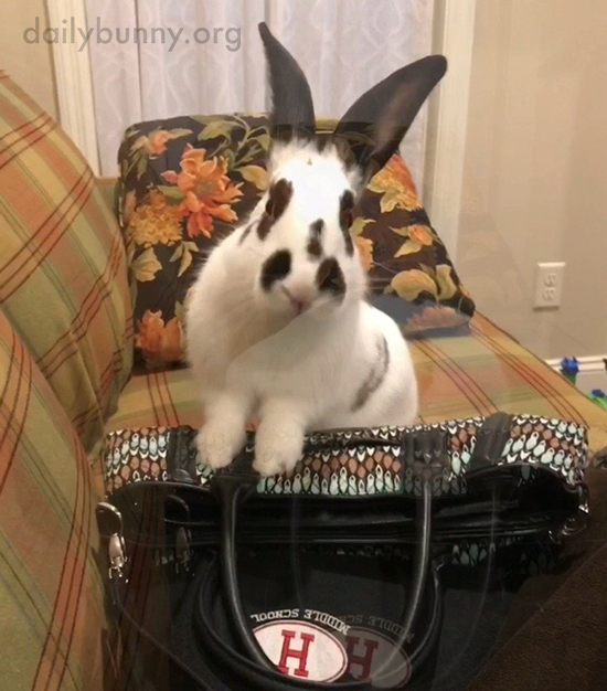 Bunny Checks Human's Bag for Anything Tasty Stashed Away 1