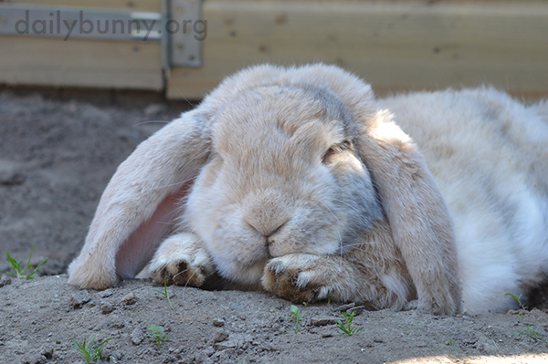 Nothing Better Than a Nap on the Cool Dirt