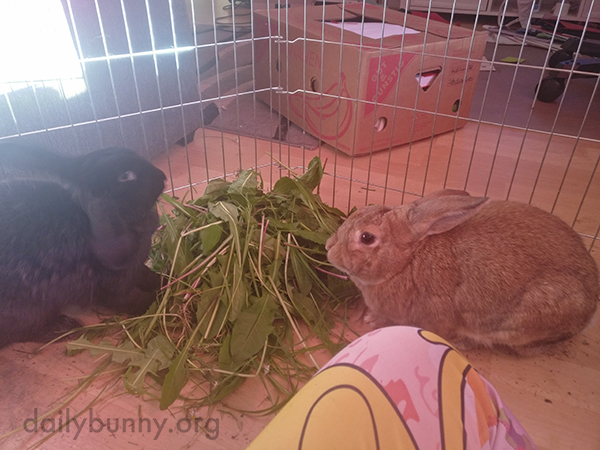 Bunnies Share a Giant Pile of Greens