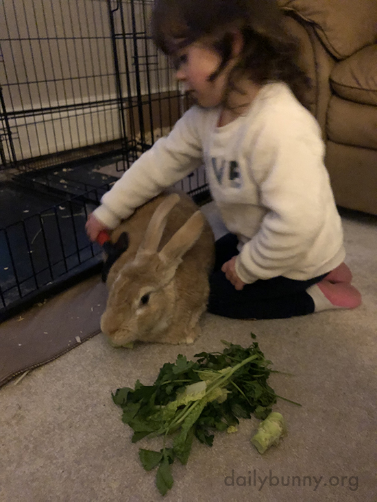 Pampered Bunny Has a Snack and a Brushing at the Same Time