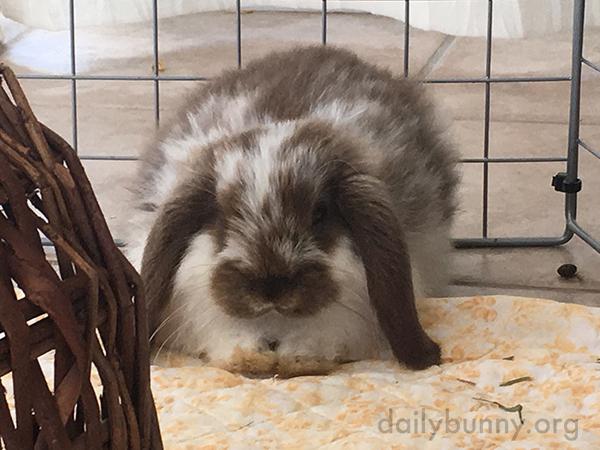 Bunny Still Has That Fluffy Baby Fur