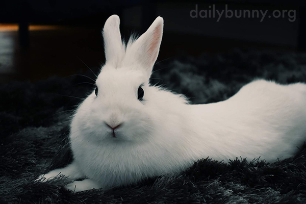 Bunny's Eyes Are Deep, Dark Inky Pools of Cuteness