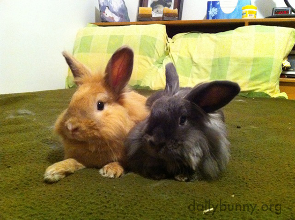 Bunnies Relax and Supervise the Room Side-by-Side