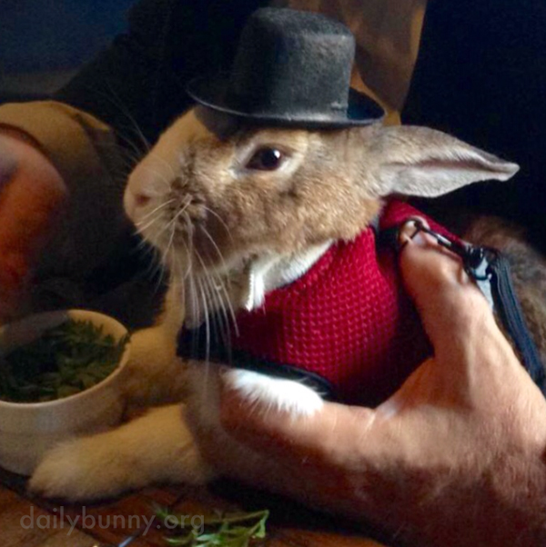 Bunny Is Becoming a Very Famous Talent