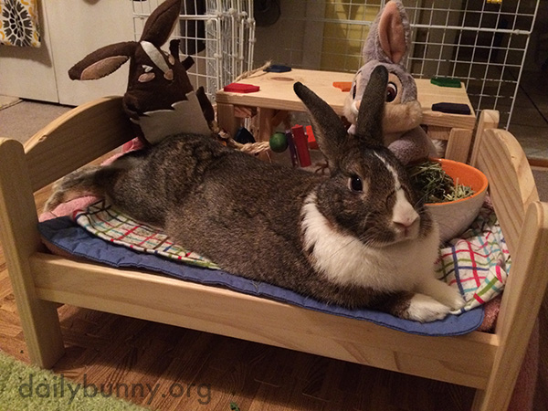 Bunny Hosts a Slumber Party