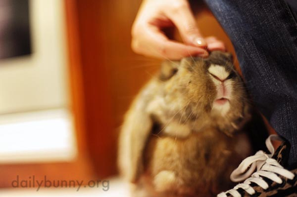 A Sweet Moment Between Bunny and Human 2