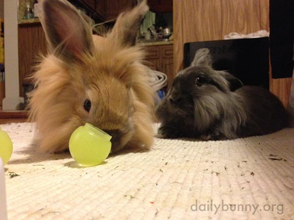 Bunny Watches Her Friend Play with a Toy