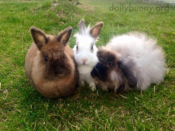 Bunnies Line Up for a Thrice-Cute Photo