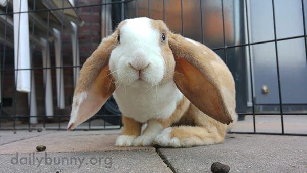 Bunny's Big Parachute Ears