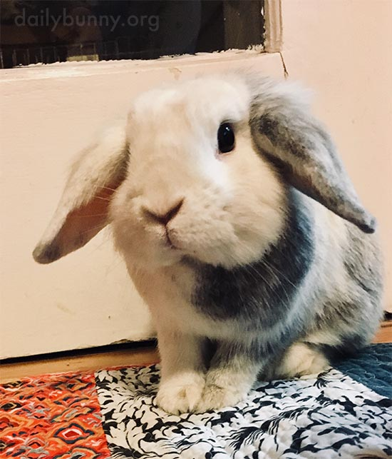 Bunny's Ears Are a Little Forward - Maybe There Will Be a Treat After This Photo!