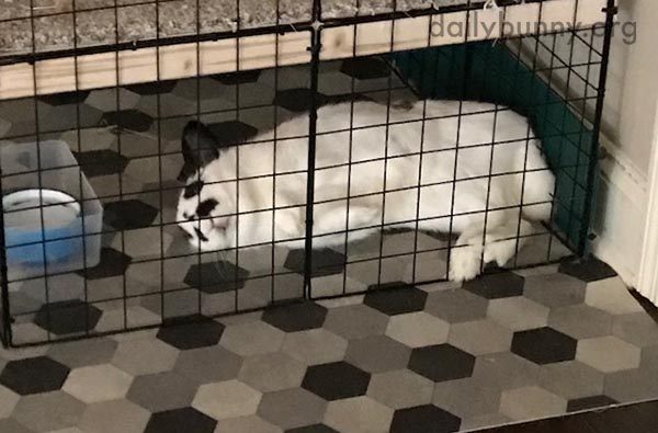 Bunny Retreats to Her Space for a Flopped Nap