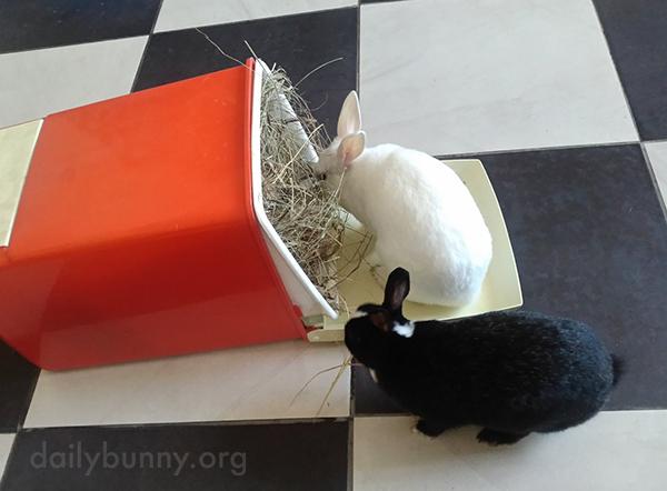 Peckish Bunnies Raid the Hay Bin 1