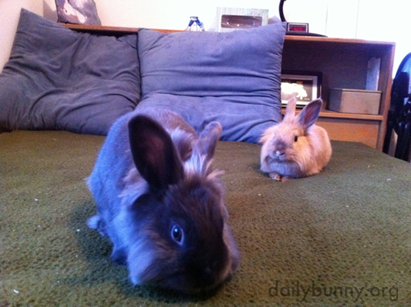 One Bunny Is Curious and One Is Content to Just Relax