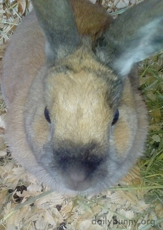 An Aerial View of Bunny