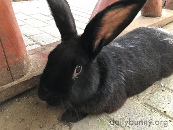 Bunny Cools Down on Shady Bricks