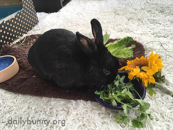 Bunny Tucks into a Smorgasbord of Plants