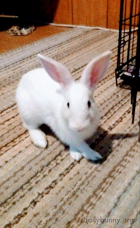 Bunny Crosses Those Front Paws