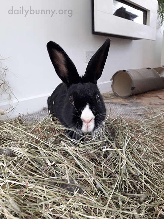 How Long Will All That Hay Last You, Bunny?