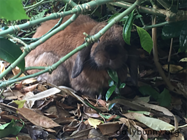 Adventurer Bunny Explores the Rainforest