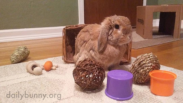 Look at All Those Fun Toys You Have, Bunny!