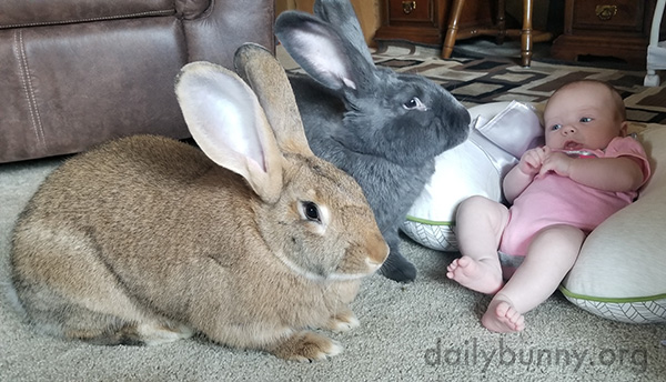 Bunnies Make Pretty Good Babysitters, But You Have to Pay Them in Banana