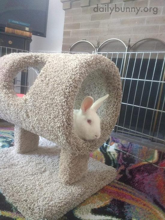 Bunny Checks Out His Birthday Presents 1