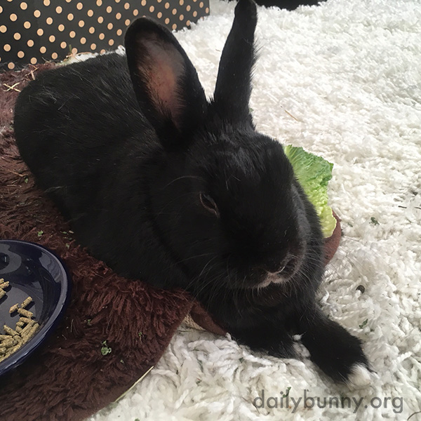Bunny Takes a Break from Her Greens
