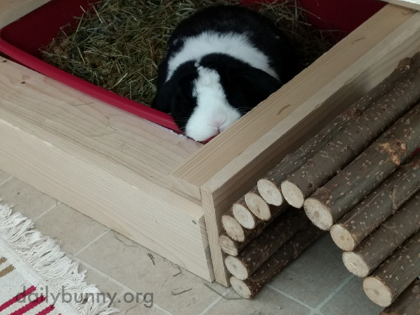 Bunny Has a Snooze in Her Litter Box