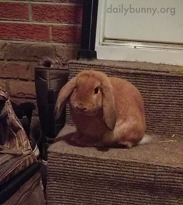Bunny Personally Greets Newcomers to the House