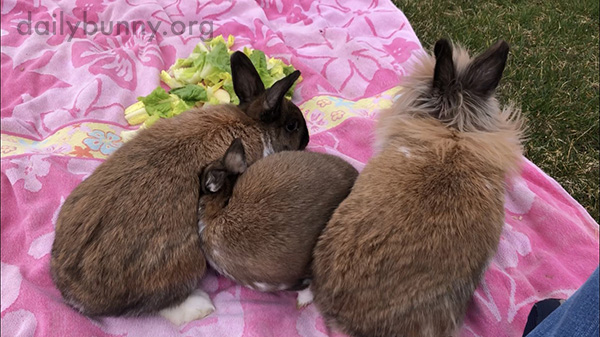 Bunnies Soak Up the Last Bit of Summer Weather with a Picnic 1