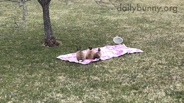 Bunnies Soak Up the Last Bit of Summer Weather with a Picnic 4